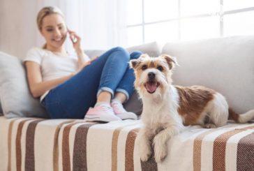 Cani in appartamento, l'Associazione Happy Dog scrive al deputato Vittoria Brambilla