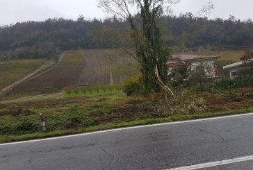 Maltempo, Coldiretti Cuneo: scampato l'incubo alluvione, si contano i danni. Compromesso il 40% delle semine
