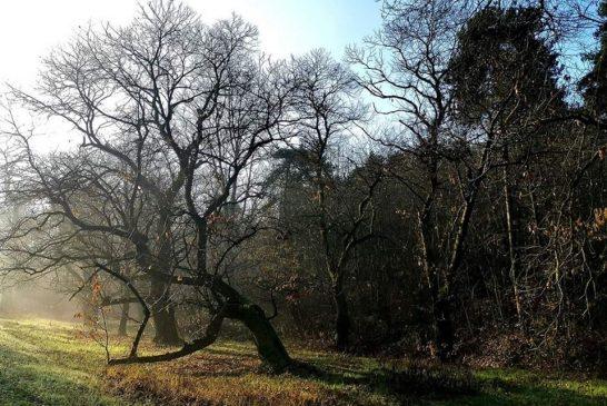 Oggi il lancio della campagna di Canale ecologia: Salviamo i castagni secolari delle rocche del Roero