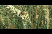 Incontro proposto dal Coldireti sull'agricoltura biologica