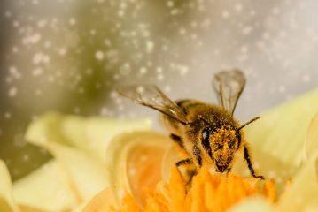 Caldo: le api stressate non volano più, -41% miele