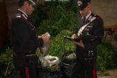 San Benedetto Belbo: tre arresti per sequestro di una piantagione di marjuana.