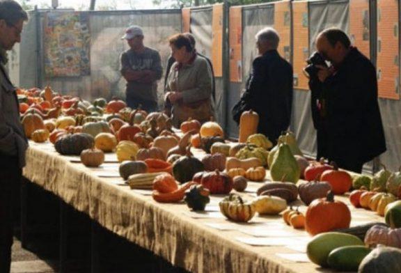 Torna la fiera regionale della zucca a Piozzo