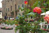 Si celebrano le rose con due giorni di grande festa