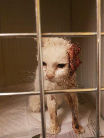 Torturano gatta ammalata: salvata dalla Lida a Sanfrè