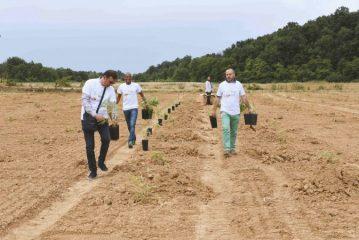Genesi Life: ad Alba e ad Asti, si investe nella Green Economy con il bambù