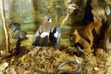 La natura di Langa e Roero: guida ai musei