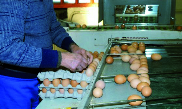 Uova al Fipronil nel Roero: due rinvii a giudizio