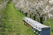 Nella Granda è emergenza frutta e miele: Coldiretti chiede lo stato di crisi