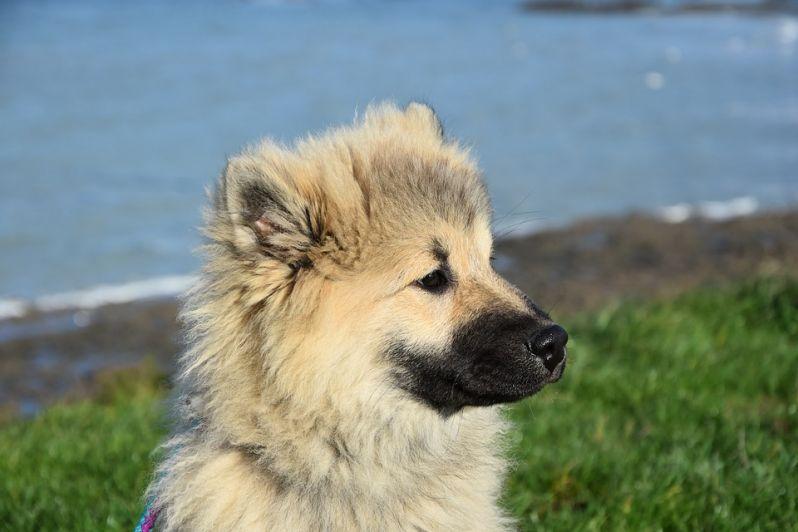 """Cani e proprietari a """"scuola"""" per la corretta gestione dell'animale"""