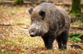 Ancora troppi incidenti causati dalla fauna selvatica