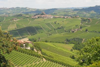 Cambiamenti climatici e agricoltura, a Monforte un focus sull'innovazione in viticoltura