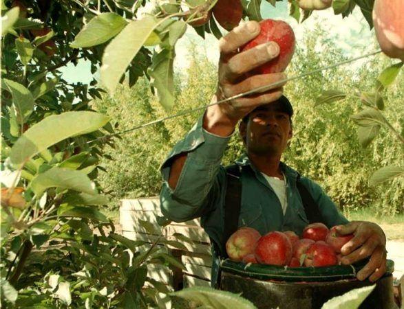 Coldiretti: frutticultura in ginocchio occorrono provvedimenti