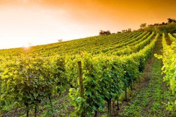 Incontro di formazione per gli agricoltori su fisiopatie delle foglie e dei grappoli