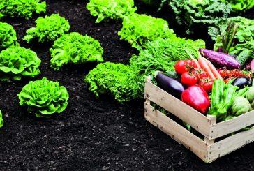 Cherasco: a febbraio un corso di orticultura e frutticultura. Quattro lezioni su come coltivare in modo biologico