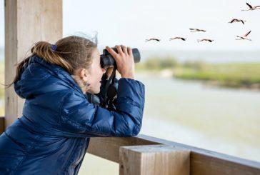 """Un ristorante per uccellini a """"portata di obiettivo"""" Come trasformare giardini e balconi in una palestra per la fotografia naturalistica"""