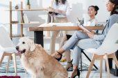 Con il cane in ufficio si sta meglio: ecco le policy pet-friendly di Tesisquare a Roreto di Cherasco