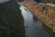 Le acque del Riddone di Corneliano stracolme di 'papere'