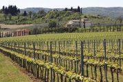 A Santo Stefano Belbo si discute di viticoltura e sostenibilità ambientale