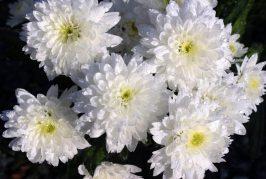 Benevello: consiglieri comunali al cimitero per annaffiare i fiori sulle tombe dei defunti
