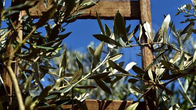 Domenica delle Palme con la protezione civile di Ceresole d'Alba