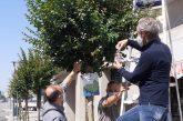 Alba: 5.600 coccinelle per la difesa biologica integrata di alberi e piante