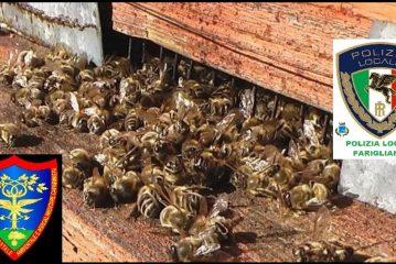 Moria di api in Langa, i carabinieri forestali multano agricoltore locale