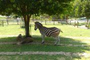 Riapre mercoledì 27 maggio il Parco Safari delle Langhe a Murazzano