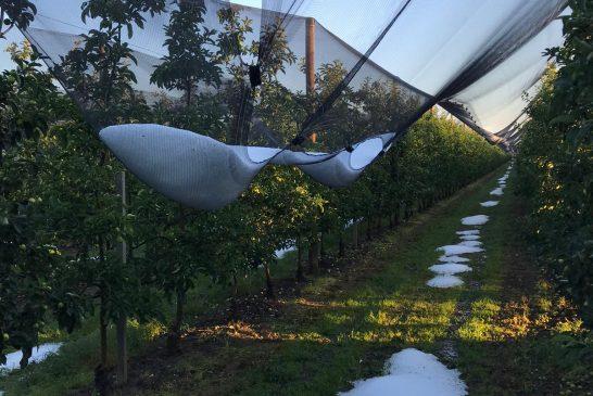 Ancora maltempo in campagna: in langa frutta e uva colpite dalla grandine in pochi giorni
